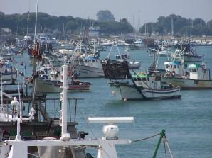 Pesca Punta Umbría