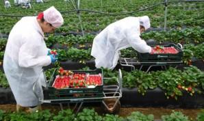 Agricultores onubenses muy pendientes del Plan de Desarrollo Rural de Andalucía