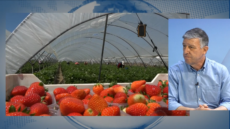 Carmelo Romero le dirá a Pablo Iglesias que respete a los agricultores onubenses
